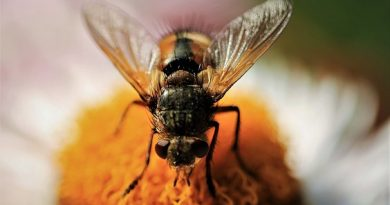 What is The Most Special 5 Benefits Hidden in Honey?