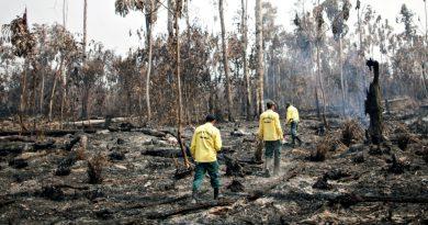 Climate change 'unabated' by coronavirus lockdowns: Live news   News